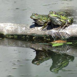 Batraciens et Reptiles